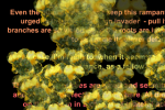 bees-300x205